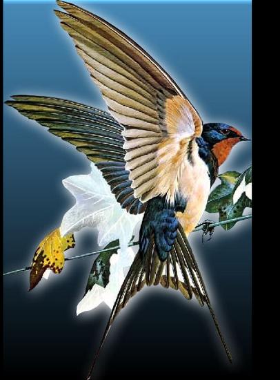 tubes_oiseaux_tiram_230