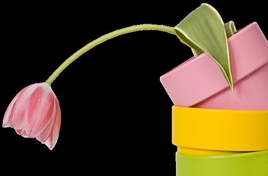 tubes_fleurs_tiram_238