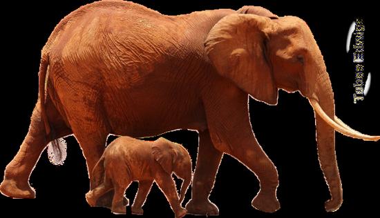 tubes_elephants_tiram_42