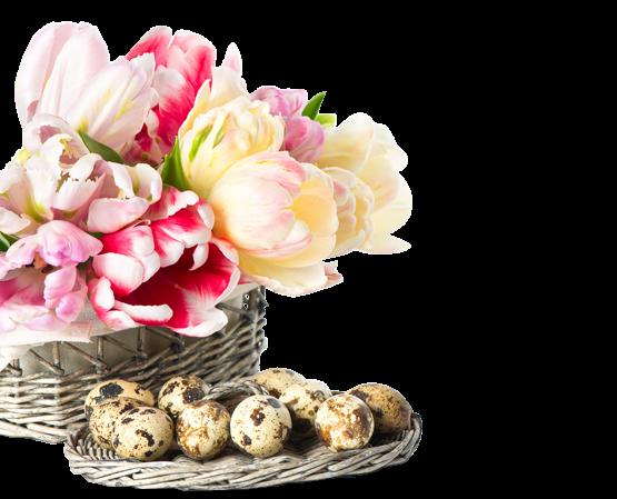 fleurs_paques_tiram_80