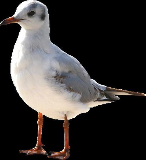 tubes_oiseaux_tiram_133