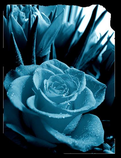 tubes_fleurs_tiram_346