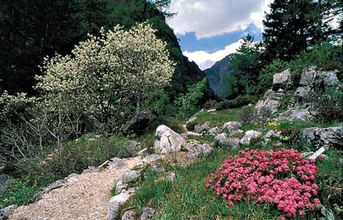 Juliana vrt