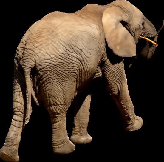 tubes_elephants_tiram_239