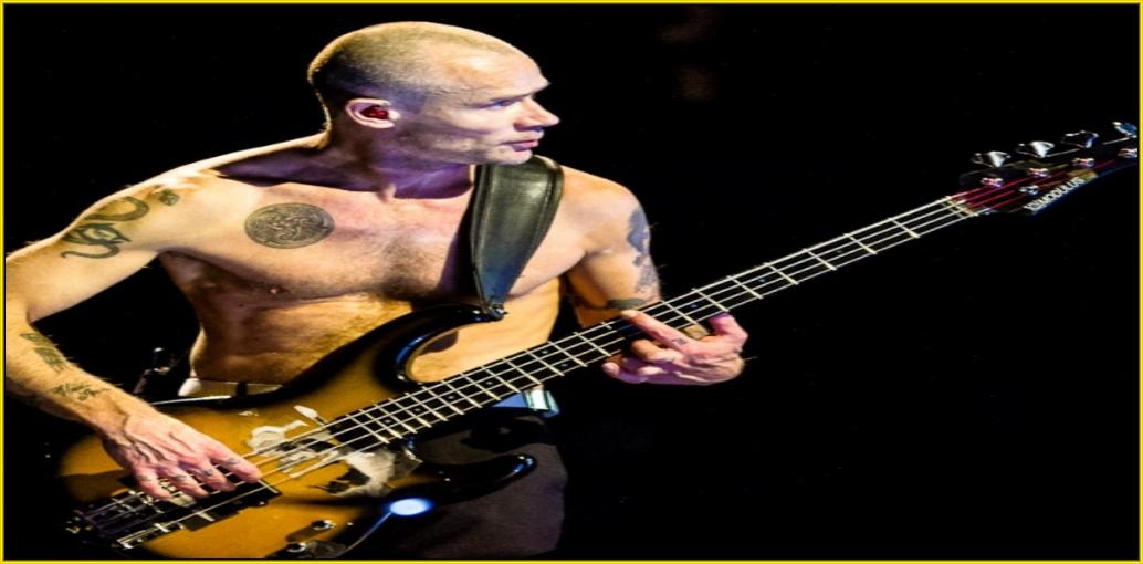 Music Artist,Musicians,Guitar Musicians,Singer Musicians,Drummer Musicians,Bass Guitar Musicians
