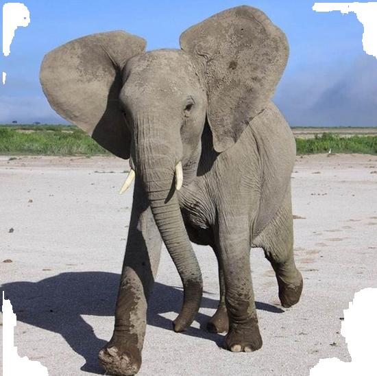 tubes_elephants_tiram_604
