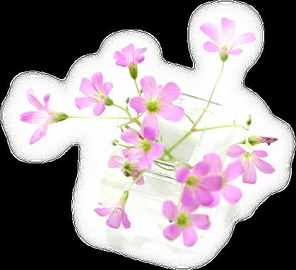 tubes_fleurs_tiram_644