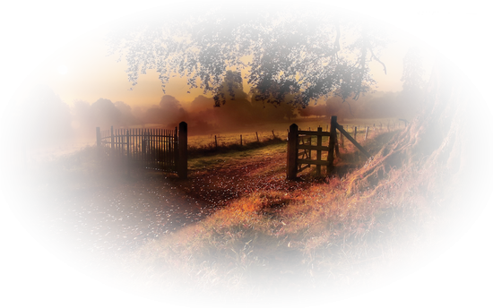 paysage_tiram_989
