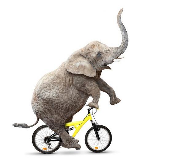 tubes_elephants_tiram_82