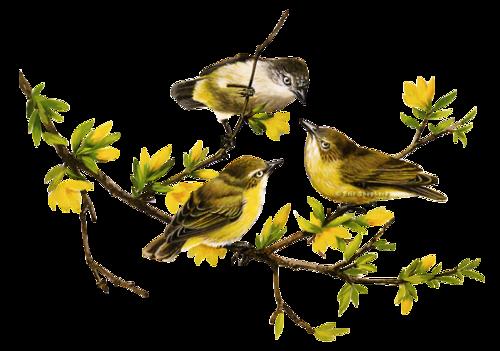 tubes_oiseaux_tiram_91
