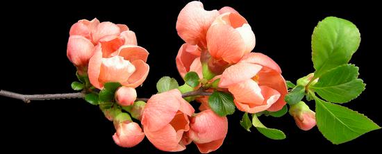 tubes_fleurs_tiram_102