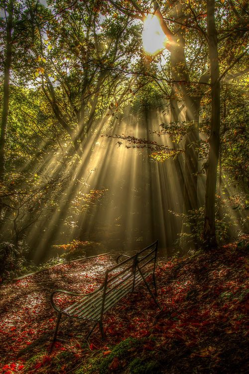 in the quiet days of Autumn rays of His glory shine through
