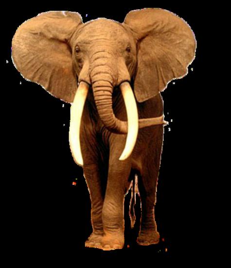 tubes_elephants_tiram_242