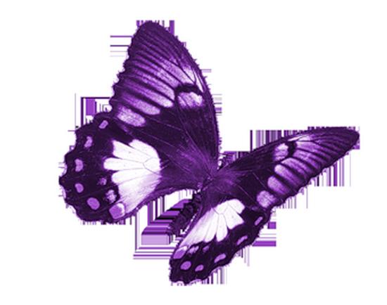 tubes_papillon_tiram_216