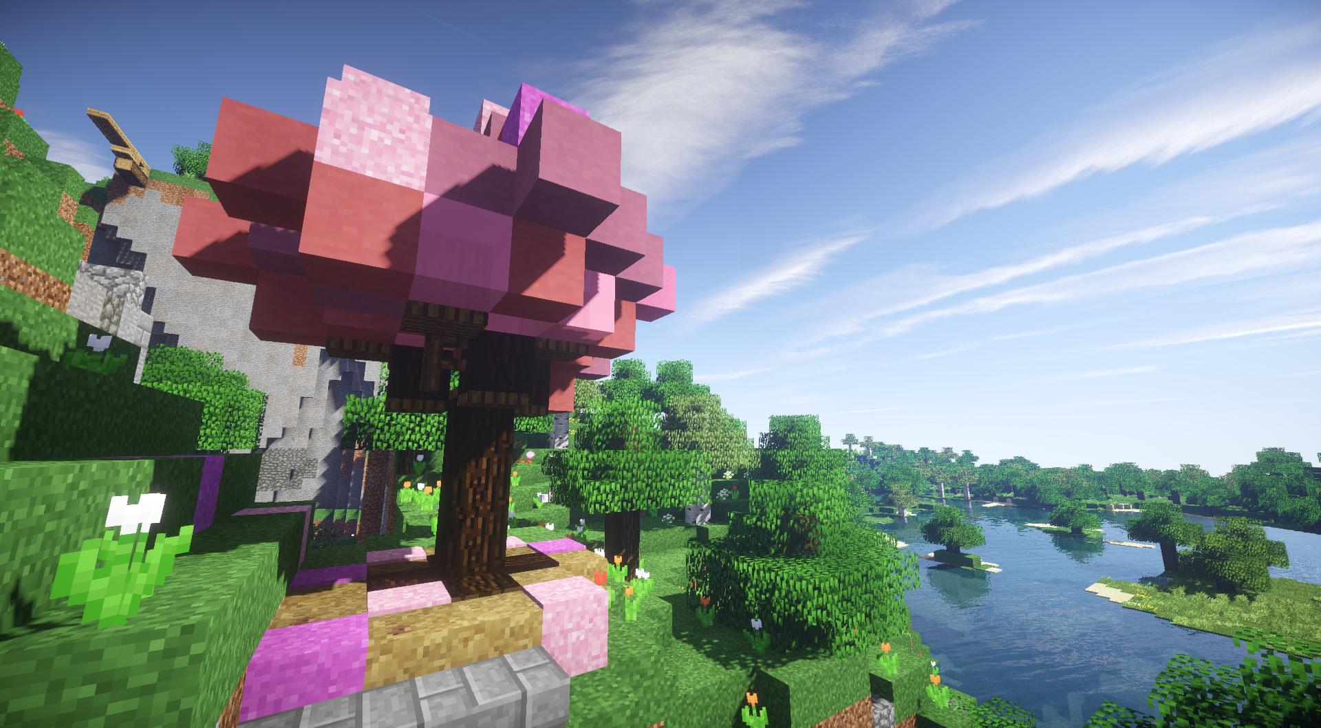 Cherry tree, view towards trampoline