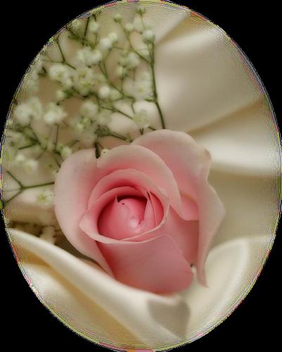 tubes_fleurs_saint_valentin_tiram_89