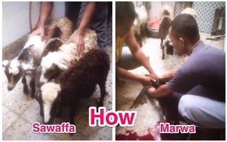 "safa_marwa"" border=""0"