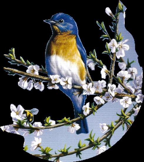 tubes_oiseaux_tiram_153