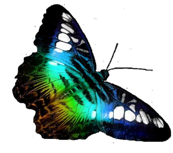 tubes_papillon_tiram_494