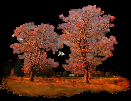 paysage_tiram_966