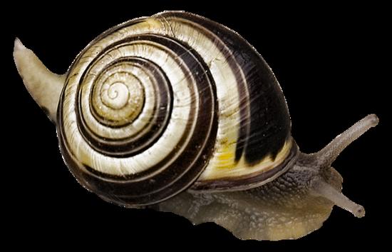 tubes_escargots_tiram_67