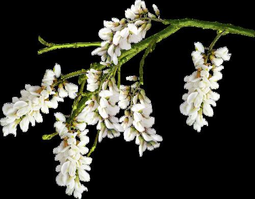 fleurs_paques_tiram_172