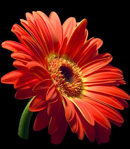 tubes_fleurs_tiram_680