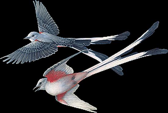tubes_oiseaux_tiram_171