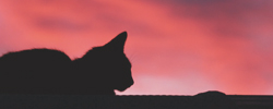 https://image.ibb.co/c0k0go/sunset_cat_silhouette_by_n_scapephotography_d4uxe0n.jpg