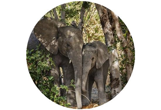 tubes_elephants_tiram_46
