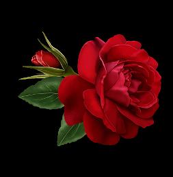 tubes_fleurs_saint_valentin_tiram_279