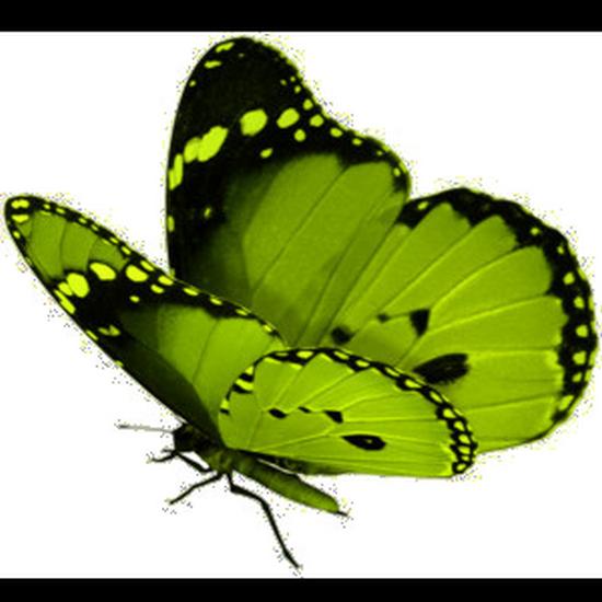 tubes_papillon_tiram_384