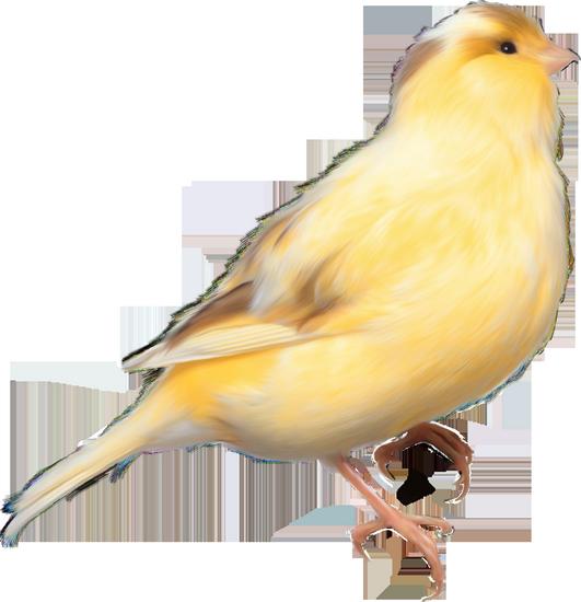 tubes_oiseaux_tiram_119