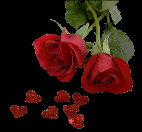 tubes_fleurs_tiram_118