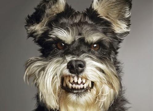 Aggressive_Dog