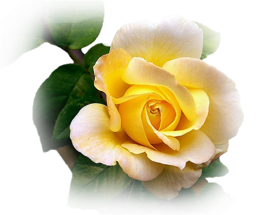 tubes_fleurs_tiram_137