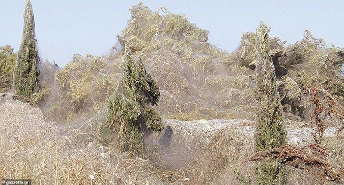 Километровая паутина окружила озеро в Греции