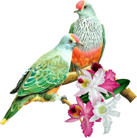tubes_oiseaux_tiram_35