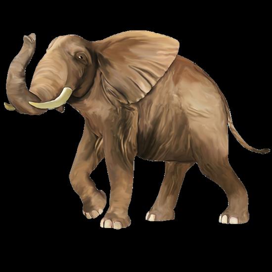 tubes_elephants_tiram_100