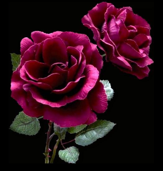 tubes_fleurs_tiram_152
