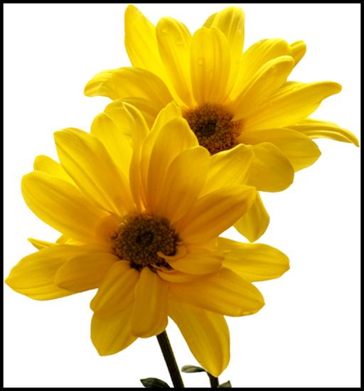 tubes_fleurs_tiram_392