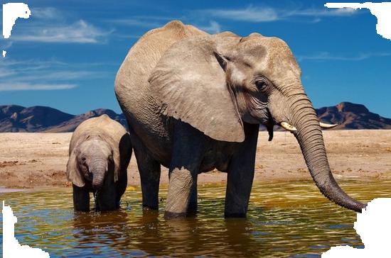 tubes_elephants_tiram_488