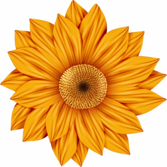 tubes_fleurs_tiram_526