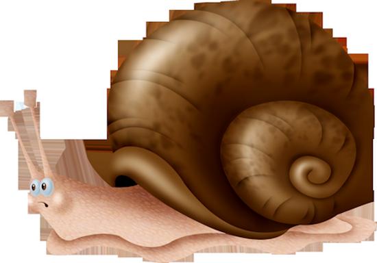 tubes_escargots_tiram_52