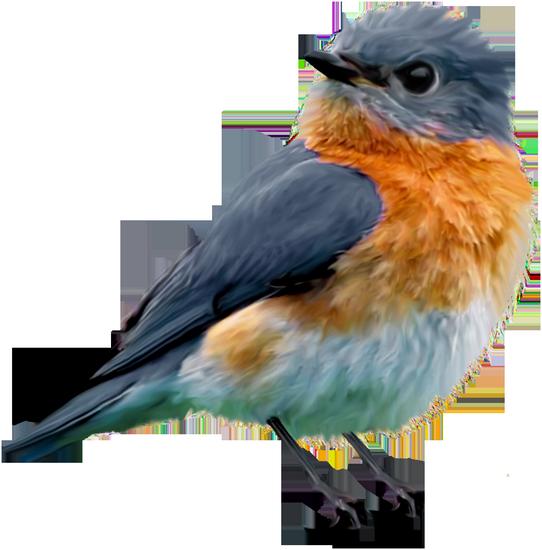 tubes_oiseaux_tiram_0