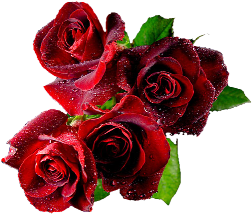 tubes_fleurs_saint_valentin_tiram_289