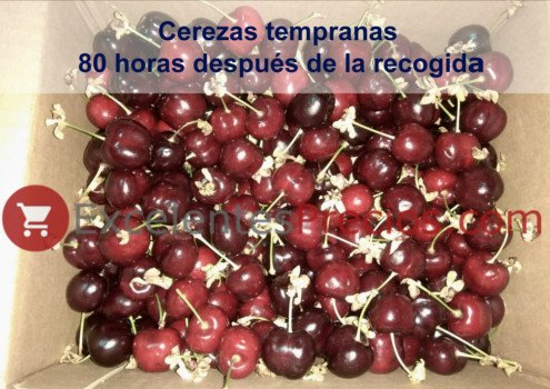 Cherries for sale, Sale of cherries online