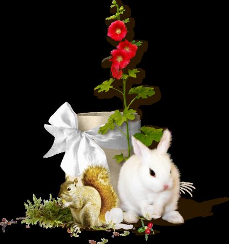 lapins_paques_tiram_363