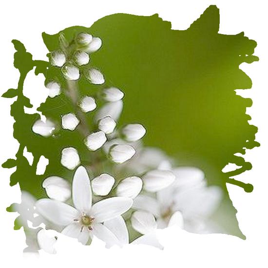 tubes_fleurs_tiram_536