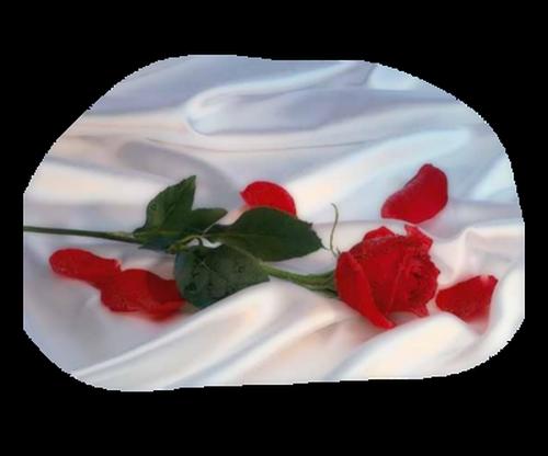 tubes_fleurs_saint_valentin_tiram_275